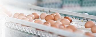 电磁流量计在监测鸡蛋场应用中的水流量应用